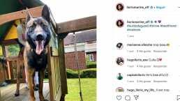 Hugo Lloris paga 17.000 euros por un perro para proteger su casa