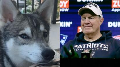 Bill Belichick hizo de las suyas en el Draft 2020 de la NFL cuando mostró al mundo del futbol americano que su perro es uno de sus fieles confidentes. Ésta es la historia de Nike, el perro del head coach de los Patriots.