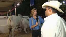 Montse, experta en vacas: 'Son los animales que se echan más gases'
