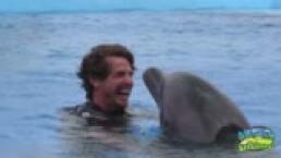 """MÉXICO DE DICHOS: ¿Habías escuchado el dicho """"Delfines que mucho saltan, viento traen y la calma espantan""""?"""