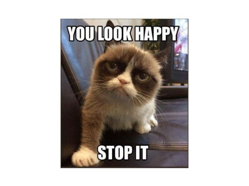 Muere Grumpy Cat, el gato más enojón y viral