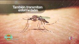 ¿Sufres de picaduras de insectos?