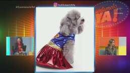 MODA: Disfraces para mascotas