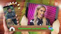 Paris Hilton expresa el amor que siente por sus mascotas