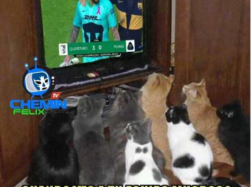 Memes 17.jpg