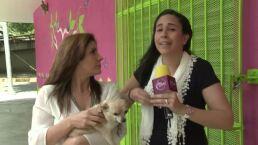 ENTREVISTA: La columnista Paola Ochoa en Como dice el dicho