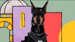 Conoce a 'Guapo', el adorable perrito de 'Patricio' en Qué le pasa a mi familia?