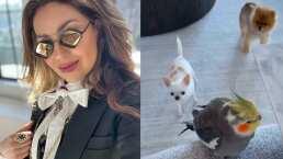 Thalía no puede desayunar a gusto porque todas sus mascotas le piden que les comparta de su comida