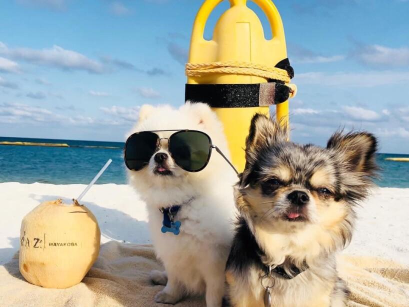 Montserrat Oliver y Yolanda Andrade quieren conocer a tus perros con el hashtag #MiMascotaEs