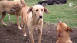 Estos perritos fueron rescatados y buscan un hogar; conoce los requisitos de adopción