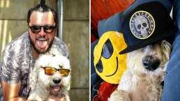 Paul Stanley intercambió ropa con su perro Paquito y este fue el resultado