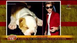 ¡Justin Bieber y sus 1001 mascotas!