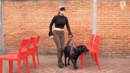Así es el entrenamiento de un perro guía, los compañeros de personas con discapacidad visual