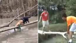 Perritos traidores: Lomitos 'recrean' video viral de Edgar se cae