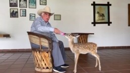 Vicente Fernández enternece en redes sociales tras darle de comer a 'Bambi'