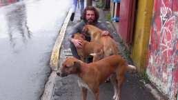 Tobías, Willis y Mohicano son tres perritos que buscan una familia, ¡adopta y no compres!