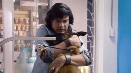 Nosotros los guapos: Vítor y Albertano entran a trabajar en una veterinaria
