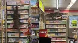 Tremendo lagartón se puso a escalar los anaqueles de una tienda