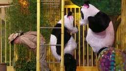 El 'Escenario Inclinado' tuvo al maestro Zhin-Gong y las pandas ganosas