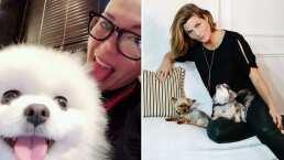 Los amores 'perros' de Montse y Joe