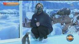 Erika Buenfil se convirtió en madrina del primer pingüino nacido en territorio mexicano