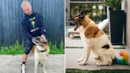 J Balvin tiñe de 'Colores' la cola de su perro; responde a las fuertes críticas en redes sociales