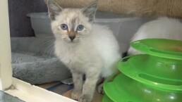 Pancho, Lala y Lola son gatitos que buscan un hogar, ¡dales otra oportunidad de vida y adóptalos!