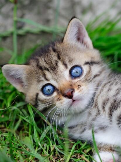 Cada gato tiene su propia personalidad, descubre cual se parece más a la tuya según tu signo zodiacal
