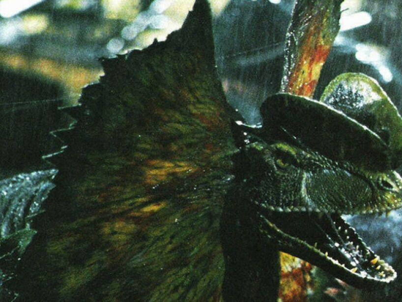 6. Los dinosarios son, en todo caso aves, nunca reptiles. Declaró el famoso paleontólogo llamado Jack Horner.