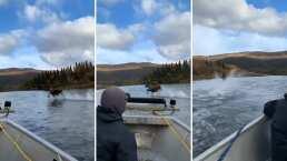 Este alce fue captado 'corriendo' sobre el agua en un río en Alaska