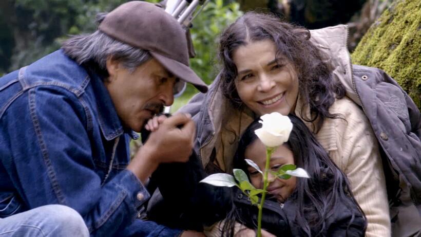 la rosa de guadalupe season 12