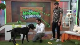 Diego de Erice habla del amor que siente por su mascota, Boston: 'me enamoré desde que lo vi'