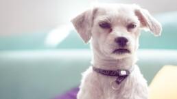 ¿Cómo identificar que mi perro está enojado conmigo?
