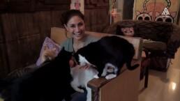 ¿Sabías que tener un gatito de mascota es benéfico para tu salud?