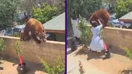 ¡Qué fuerte! Mujer enfrenta a oso y lo empuja para proteger a sus perros