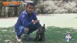"""Raúl Araiza muestra lo bien entrenado que tiene a """"Luciano"""", su bulldog francés"""