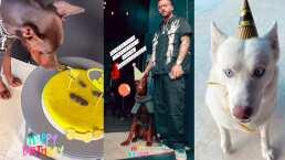 Con decoraciones de Batman, Maluma festeja el cumpleaños de su perrito Buda