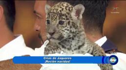 Ayuda a la preservación de especies en peligro de extinción