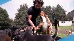 Estos perritos fueron rescatados y buscan un hogar, ¡Adopta!