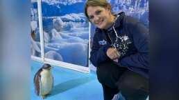 Erika Buenfil se convierte en la madrina del primer pingüino chilango, así fue su encuentro