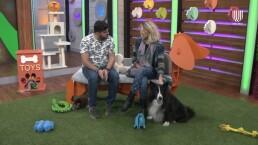 Verónica Jaspeado comparte cómo es la 'terapia de amor' que le da a su mascota Beluga Rock