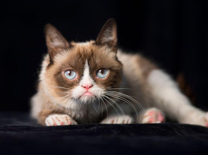 Los mejores memes que Grumpy Cat inspiró con su mal humor