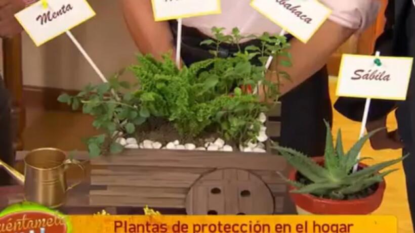 Feng shui: Plantas para proteger tu hogar ¡Increíble! 17 agosto 2016