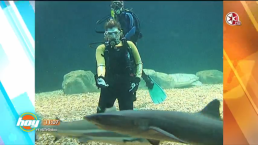 ¿Te atreverías a nadar con tiburones? Descubre quién lo hizo