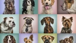 El mejor perro que puedes tener según tu horóscopo