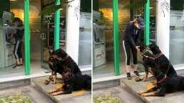 Como guardaespaldas: Esta mujer se volvió viral por asistir al cajero automático con tres perros dóberman