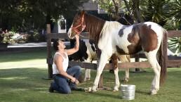 Amores con trampa: ¡Vivirán entre animales y lujos!