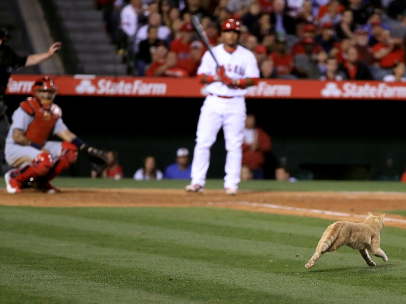 St Louis Cardinals v Los Angeles Angels of Anaheim