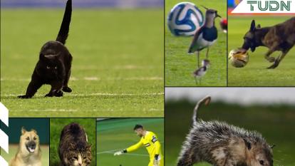 Perros, gatos, tlacuaches y aves han detenido por minutos las acciones dentro de diversos terrenos de juego.