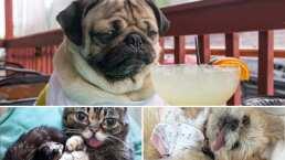 Grumpy Cat y otras adorables mascotas famosas de Instagram